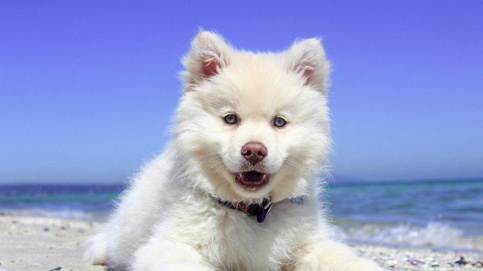 Urlaub mit einem Hund