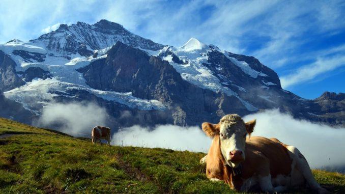 Aktivurlaub in der Schweiz